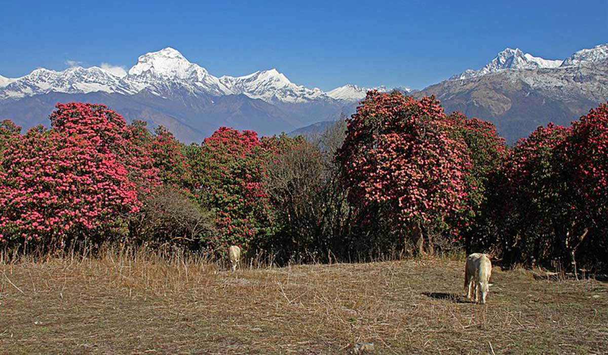 When To Go Annapurna Circuit Trek